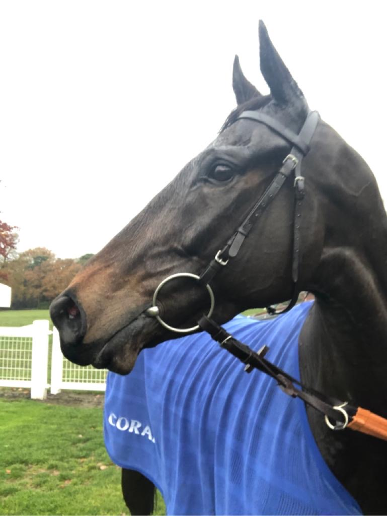 MASTER DEBONAIR - wins impressively by 7 lengths at Ascot